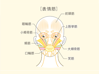 筋肉がたるむと その上にある皮膚が下がり老けた印象を与えてしまいます。